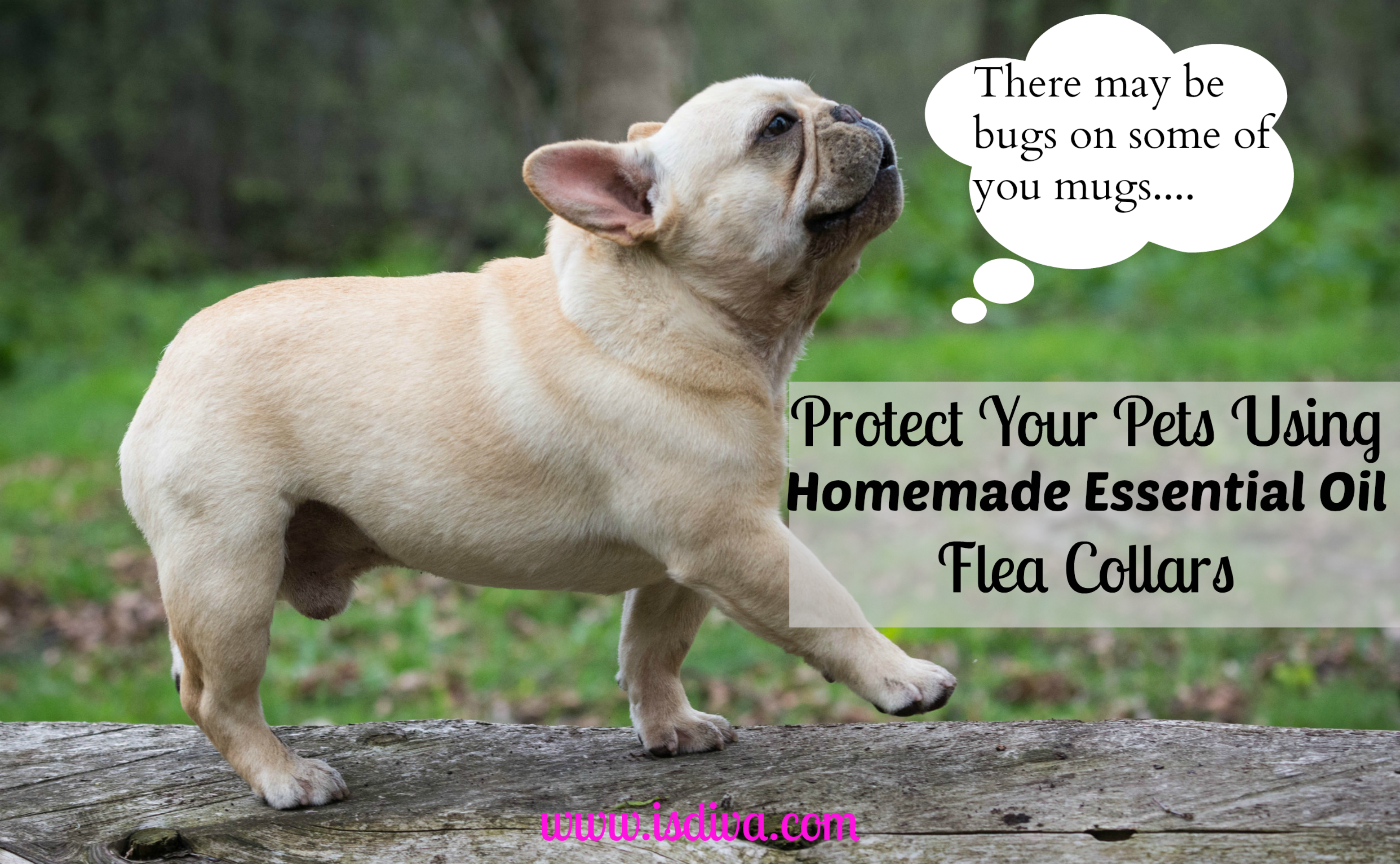 Protect Your Pets Using Homemade Essential Oil Flea Collars